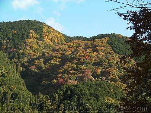 紅葉している大和葛城山