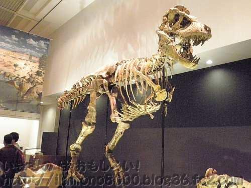乱杭歯を剥きだして吠えている?タルボサウルス「発掘! モンゴル恐竜化石展」〈大阪市立自然史博物館〉