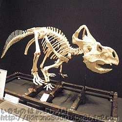 プロトケラトプス成体