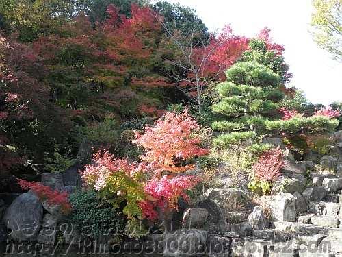 石水苑の紅葉