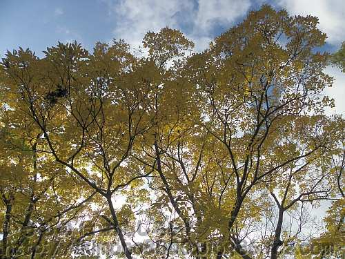 梅の里頂上の黄葉