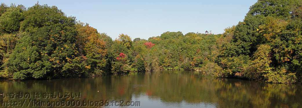 奥の池と小さく見える展望台
