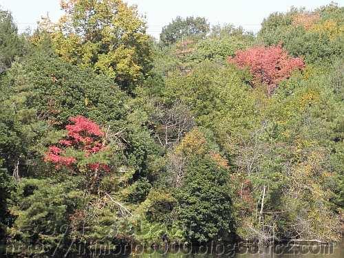 奥の池の紅葉
