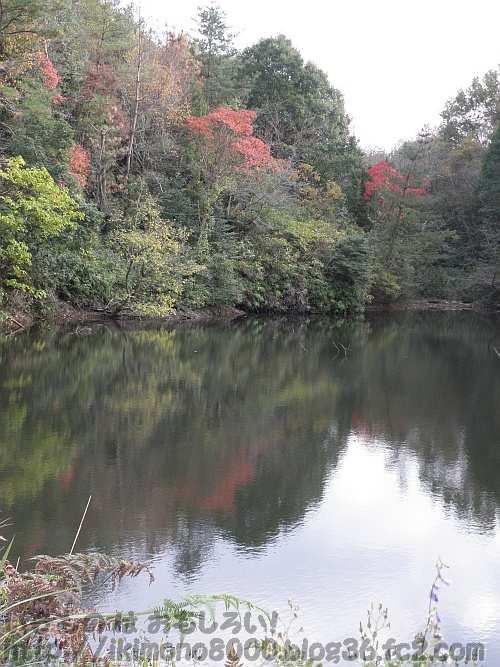 南浦谷池の逆さ紅葉