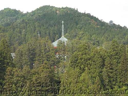 木々の間から見える高野山壇上伽藍の中心の根本大塔