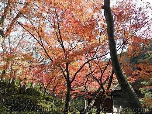 紅葉と鳶魚閣(えんぎょかく)