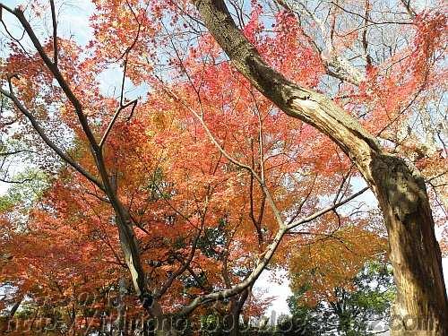 枯木と紅葉