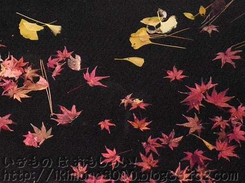 池に浮かぶ紅葉