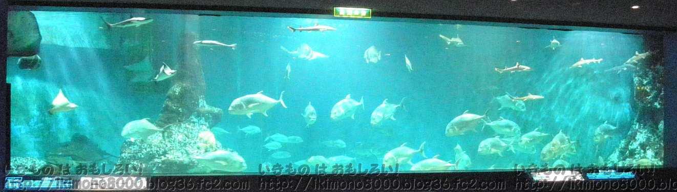 幅15mの一枚ガラスの和歌山県立自然博物館の大水槽