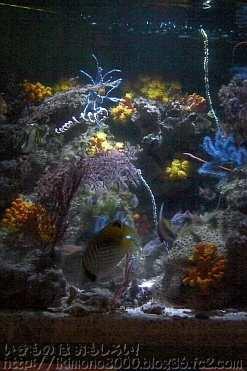 光が少なくても大丈夫な陰日サンゴ