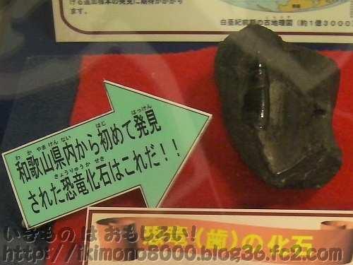 和歌山で見つかった肉食恐竜(獣脚類)の歯の化石