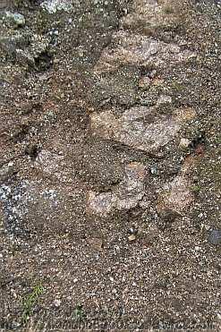 シマヘビが登っていったあたりの切り崩されたばかりの壁