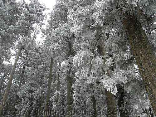 山頂広場の上の樹氷杉の軍団