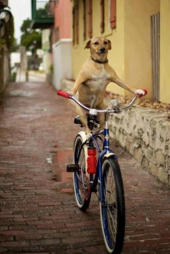 doggybike.jpg