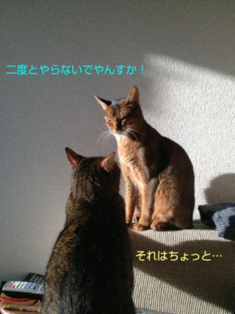 20130314_200541.jpg