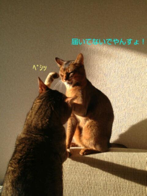 20130319_065715.jpg