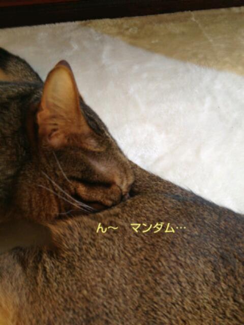 20130319_072402.jpg