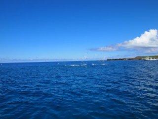 20120912魚に群れる海鳥