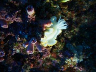20120913中の島ホールメレンゲウミウシ
