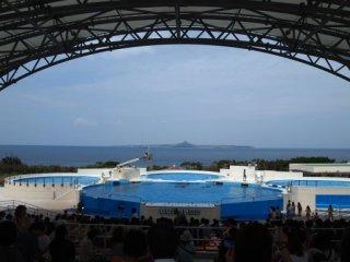 20120919美ら海水族館イルカショー会場