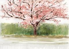 相馬駅の桜