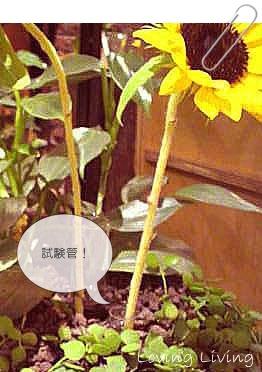 青山フラワーマーケット ティーハウス  Aoyama Flower Market TEA HOUSE  植木鉢に試験管
