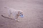 拾ったボールでちょー楽しそうな犬①