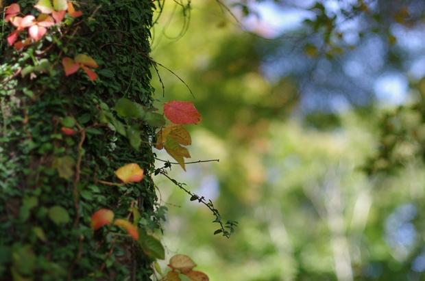 やっと見つけた秋な感じ