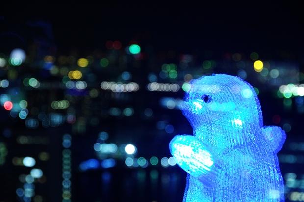 ペンギンがガラスに写っているよ♪