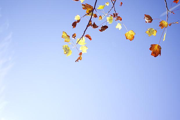 葉っぱは小さくて、そんなにきれいじゃないけどね。