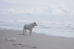 きみがとても楽しそうだった海の日
