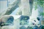 パンダも寝る。