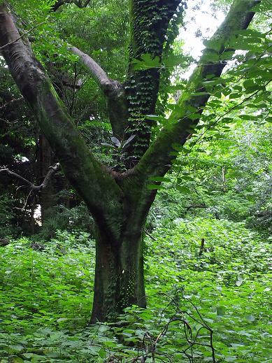 樹木の不思議