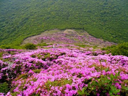 8 平治岳登山途中から見下ろす