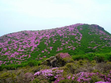 18 平治岳南峰から山頂花畑