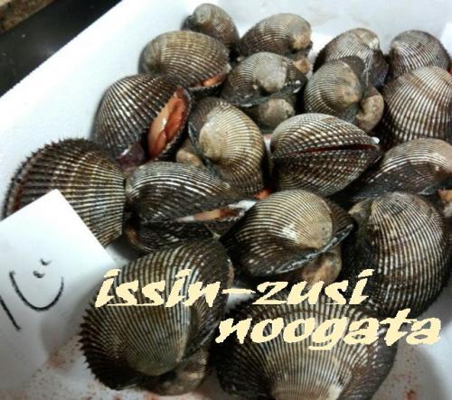 殻つき赤貝