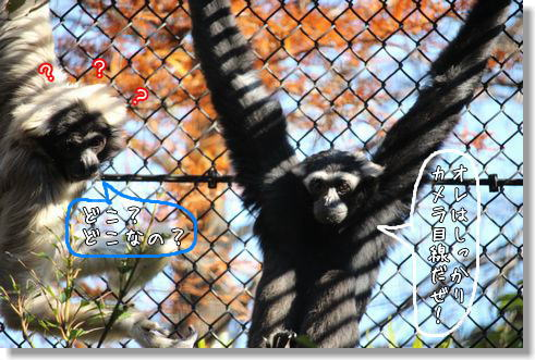 zoo8.jpg