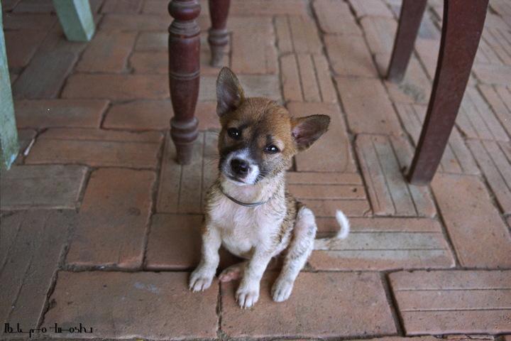 ダナンの幼犬