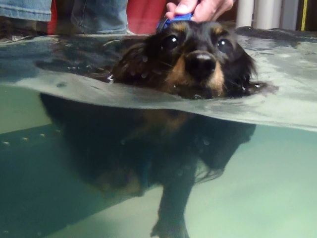 Nonn泳ぐ