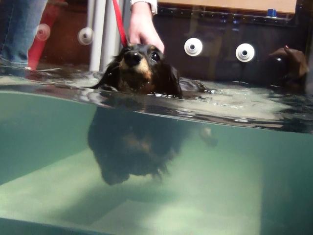 Nonn泳ぐ (3)