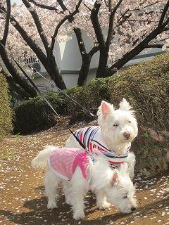 桜 028