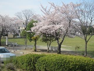 桜 045