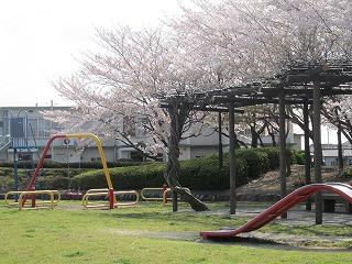 桜 038