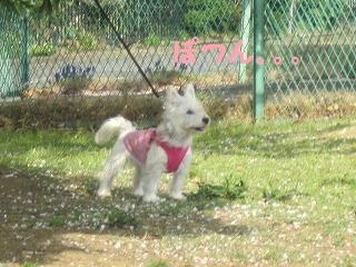 桜 111