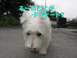 編集_12073 015
