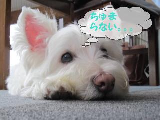 再編集_2012-08 028