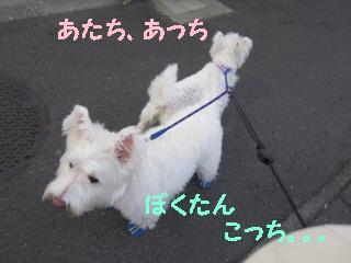 R_062.jpg