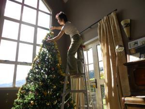 Tree & ladder
