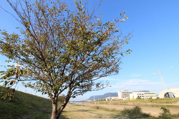 simboltree.jpg