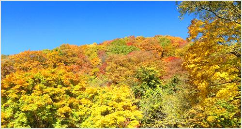 長野の安曇野工場へ向かう途中で紅葉を見ました。